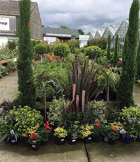 Gardening World Limited - Garden Centre Kent, Newington and Sittingbourne. Trees, shrubs and roses.
