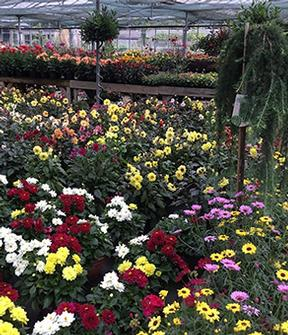 Gardening World Limited - Garden Centre Kent, Newington and Sittingbourne. Bedding plants and perennials.
